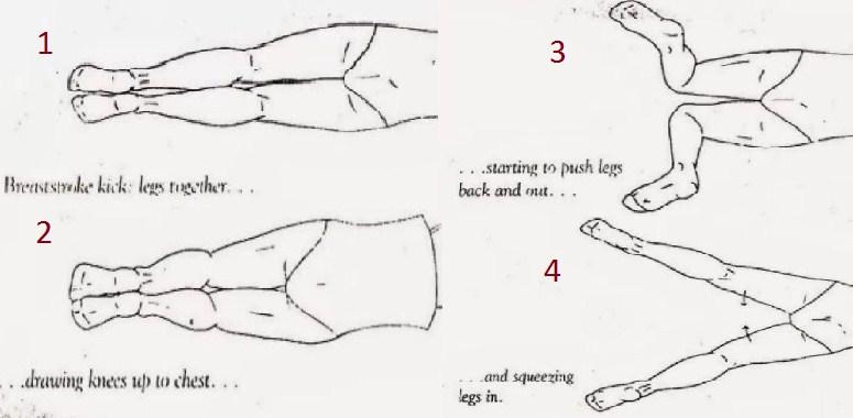 83 Gambar Bentuk Latihan Renang Gaya Dada Paling Hist