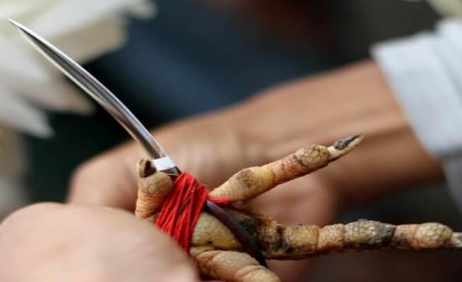 Taji Senjata Tradisional Bali